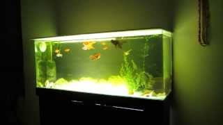 Panoramic Aquarium On Sale On Ebay