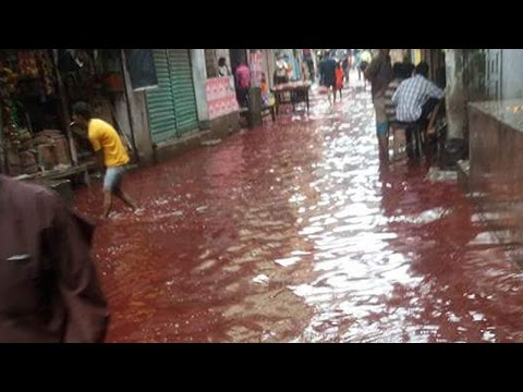 Dhaka streets turn into blood river on Eid, here