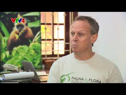 DELACOUR'S LANGUR CONSERVATION ON VTV4 - VIETNAMESE VER