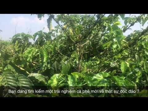Vietnam's got Finest Arabica Coffee Beans