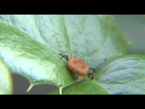 Bugs Away Outdoor Blanket | Solutions