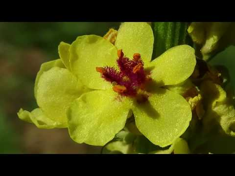 Фото-клип весенне-летняя природа.