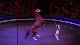 Шоу белых медведей в Кировском цирке (фрагменты)