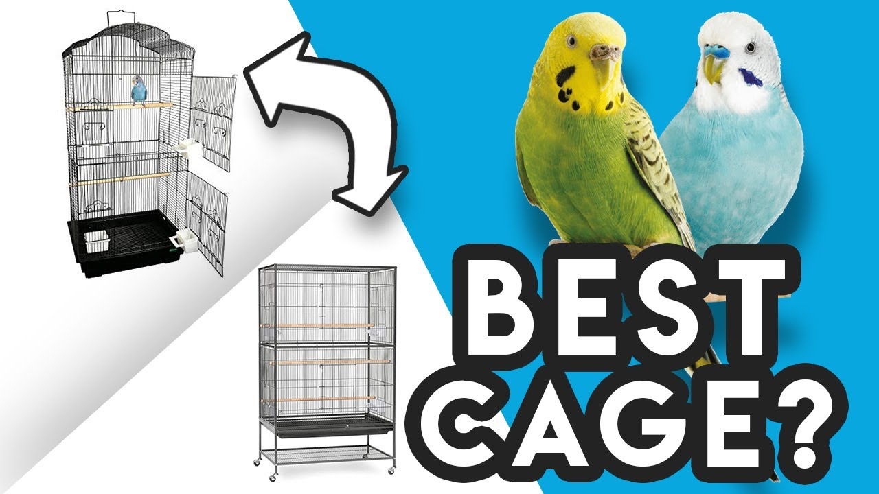What Cage is BEST for a Budgie / Parakeet