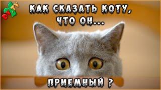 Миники 005 ♦ Как сказать коту что он приёмный?