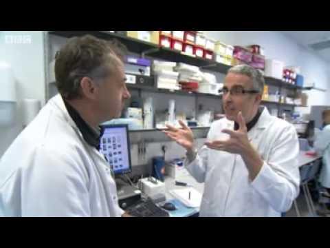 Ash dieback Inside lab tackling disease