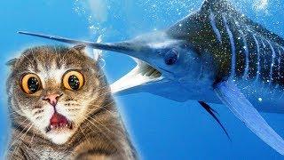 КОТЕНОК РЫБОЛОВ В поисках РЫБЫ МЕЧ симулятор маленького котенка рыболова веселый летсплей от #фгтв