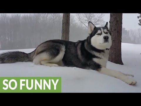 Husky's mad dash through first snowfall of the season