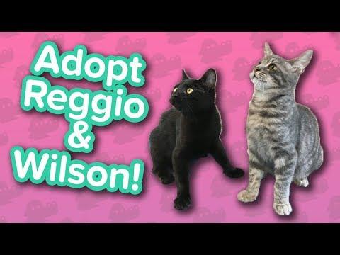 Adopt Wilson & Reggio! // Kittens // Adoptable Featurette