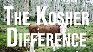 Is Kosher Beef Hormone & Antibiotic Free?