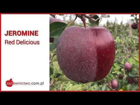 Jeromine - Red Delicious [odmiany jabłoni / apple variety]