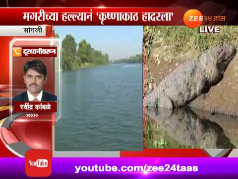 Sangli |  Dead Body Of Boy Found Which Was Attacked By Crocodile