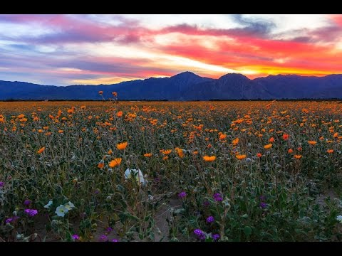 Anza Borrego Desert State Park Wildflowers Super Bloom 2017 Time Lapse
