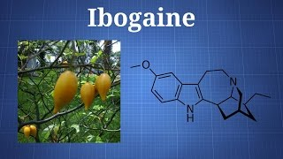 Ibogaine and Iboga: What You Need To Know