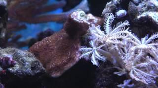 Gut reef  9 12    8 13