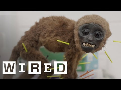 Meet the Taxidermist Saving Long-Dead Animals from Decay | WIRED Originals