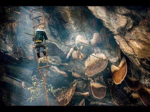 Добытчики дикого меда в Непале. Познавательный фильм.