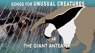 Giant Anteater | Songs for Unusual Creatures | PBS Digital Studios