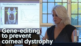 Developing gene-editing to prevent  corneal dystrophy