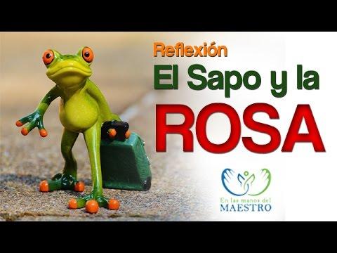 Reflexiones Cristianas La Rosa Y El Sapo Youtube