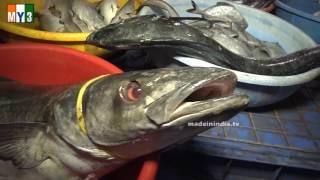 BIGGEST FISH MARKET IN INDIA