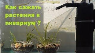 Как сажать растения в аквариум ?