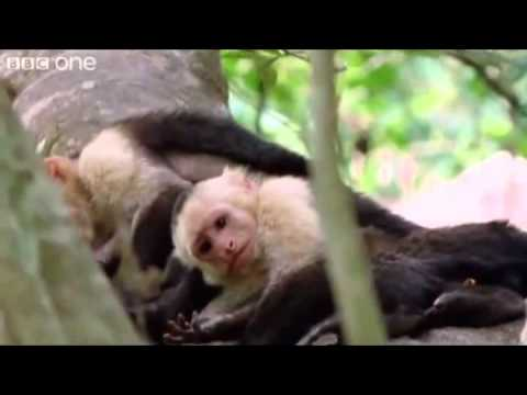 planets funniest animals youtube - photo #18