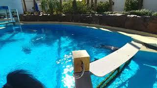 Dolphins at The Secret Garden, Mirage