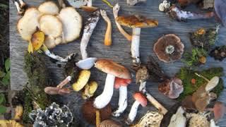 Biodiverse | Wikipedia audio article