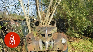 The Forest of Forgotten Cars