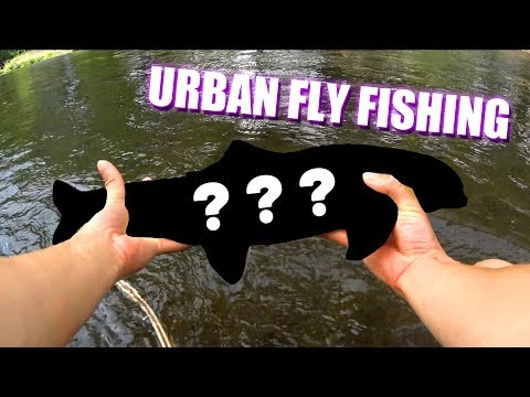 Fly Fishing In An URBAN River!