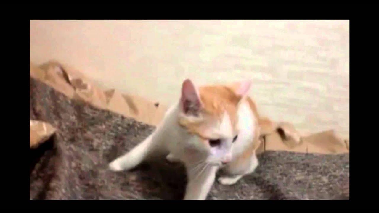 Смехота коты