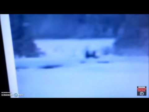 Bigfoot Family Filmed by Security Camera at Yellowstone National Park - Original Video