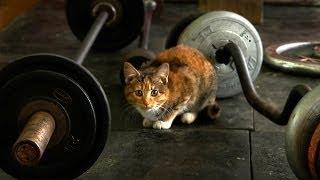 Качаемся вместе с котом! (2015) | Funny cats compilation
