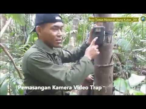Good News for Javan Rhinos