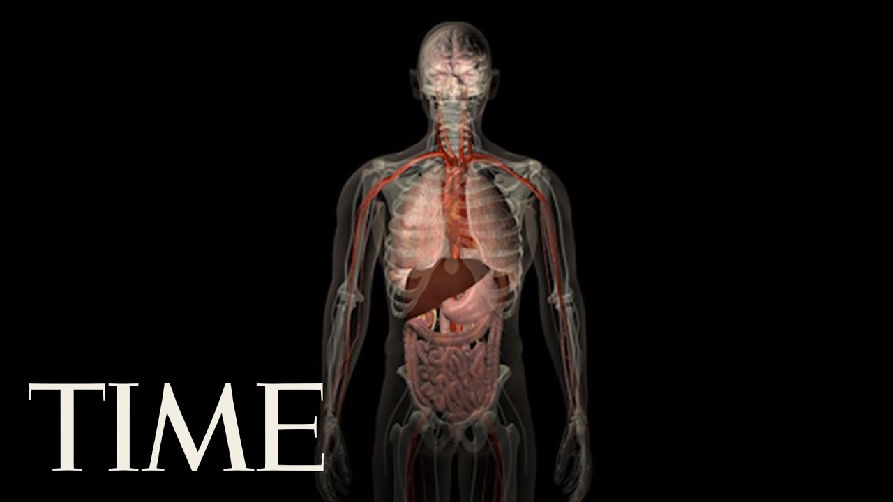 Scientists Discover A New Organ In The Human Body Time Youtube