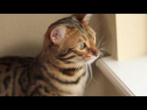 good flea medicine for kittens