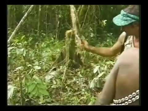Suku Pedalaman Papua Nugini Bertemu Bule Kulit Putih Untuk Pertama Kalinya. Part 3
