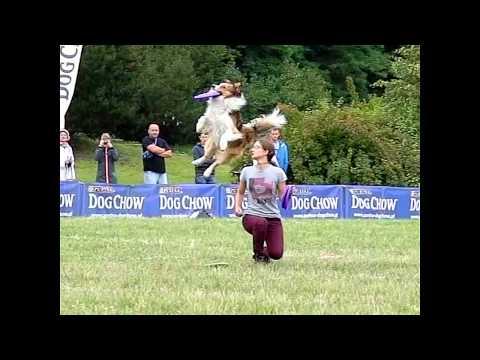 Dog Chow Disc Cup Poznań'15 ◄ slow motion