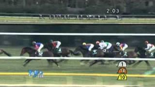 2011 ダイヤモンドステークス コスモメドウ