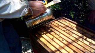 Gandy Brothers Apiaries, Bee Sting removal