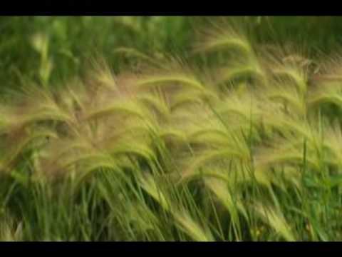 Haleluljah Never Ending - Caedmon's Call & Silers Bald