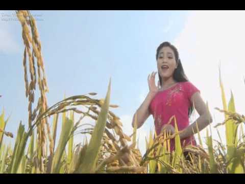 Tuyển tập các ca khúc hay về huyện Yên Thành: Quê Lúa Yên Thành