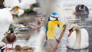 Winter birds 2021