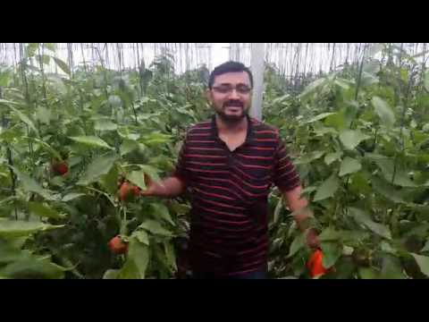Organic life...!! Farm house at nasrapur near pune...|!!