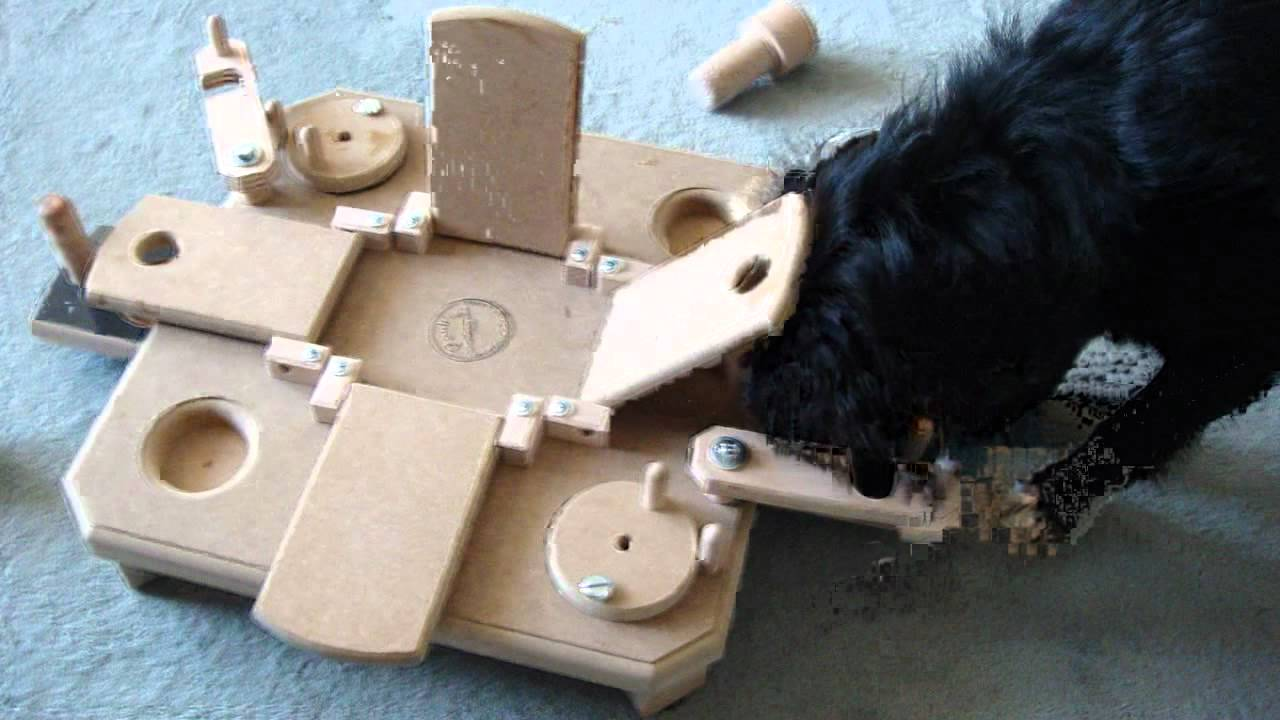 1 intelligenzspielzeug perro mit pauli s commander youtube. Black Bedroom Furniture Sets. Home Design Ideas