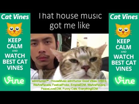 Ultimate Cat Vines Compilation #1 - April 2016