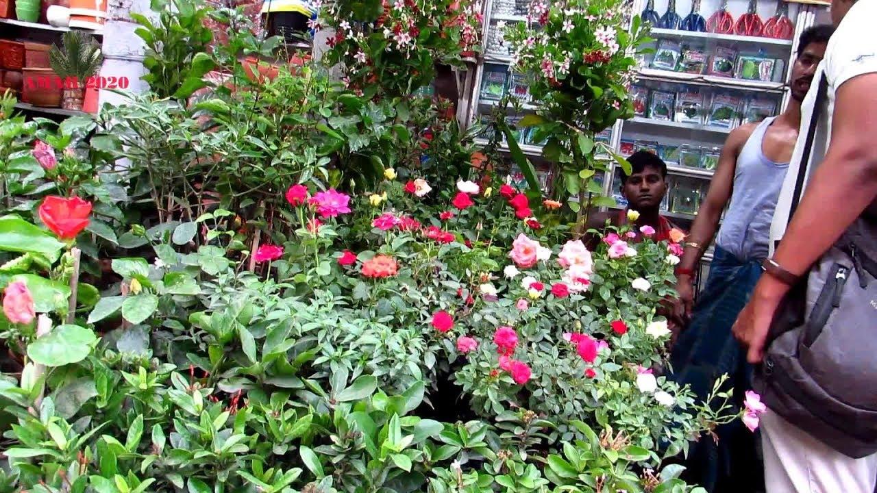 Seller Plant