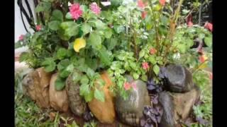 Chuva e flores tristes no Jardim . rain in my garden .ploaia. legenda português inglês