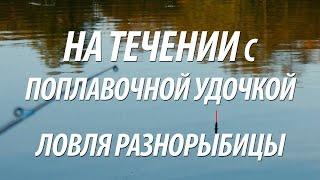 РЫБАЛКА НА ПОПЛАВОЧНУЮ УДОЧКУ С НОРМУНДОМ ГРАБОВСКИСОМ НА ТЕЧЕНИИ(Рыбалка в Латвии с Нормундом Грабовскисом. Ловля на течении поплавочной удочкой разнорыбицы, поплавочная..., 2015-08-11T22:40:24.000Z)